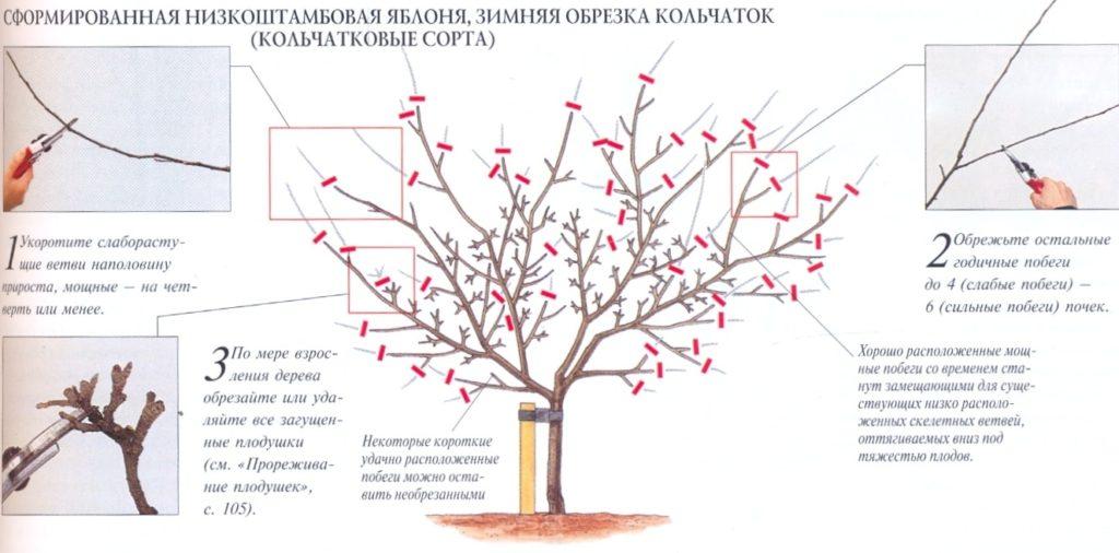 Осенняя обрезка яблонь и груш видео