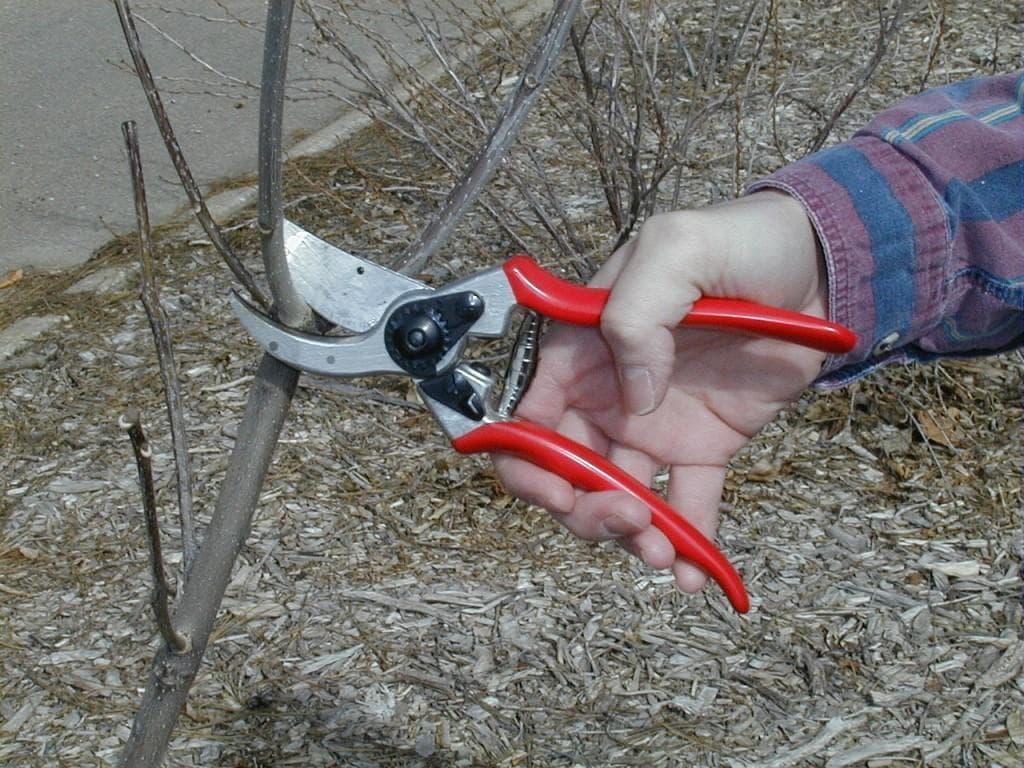 как обрезать деревья фото
